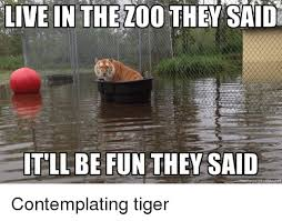 They Said Meme Generator - live in the zoo they saidu tllbe fun they said meme generator net