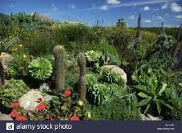 Tropische Pflanzen Im Garten Sub Tropische Pflanzen In Den Gärten Des Berühmten Tür Minack