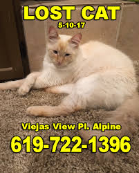Missing Cat Meme - lost cat male white cat with tan face viejas view pl alpine 5 10