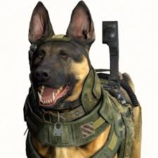 Know Your Meme Dog - call of duty dog know your meme