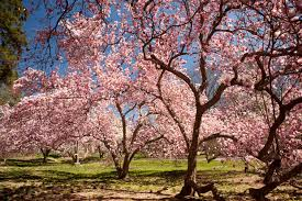 beautiful blooming trees the garden glove