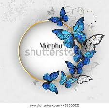 gold blue butterflies morpho stock vector 458000026