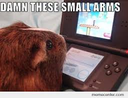 Guinea Pig Meme - everyday struggle in the life of a guinea pig by ben meme center