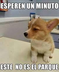 Memes Funny En Espaã Ol - memes en espa祓ol buscar con google compartirvideos