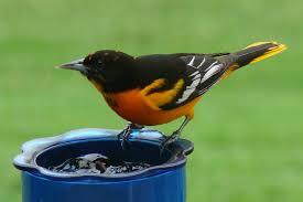 top 10 weird things to feed birds bird watcher u0027s digest