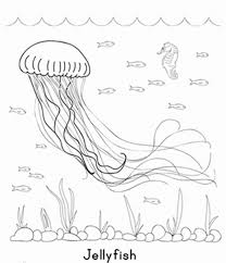 sea creature coloring pages jellyfish coloring pages sea