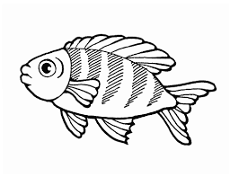 outline of fish amazing with photo of outline of 73 5584