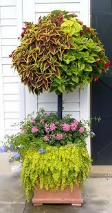 54 best container gardening images on pinterest garden ideas