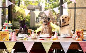 dogs at dinner table party on pups a staggering three quarters of dog owners admit to
