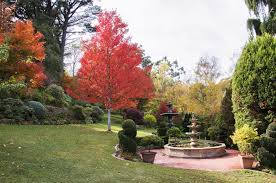 Kyneton Botanical Gardens Open Garden Forest Glade Visit Macedon Ranges
