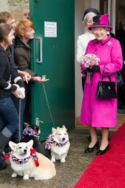 queen elizabeth dog 80 years of the queen s royal corgis queen elizabeth s dogs