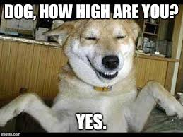 Stoned Dog Meme - stoner memes