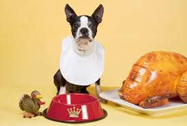 thanksgiving food safe for dogs k9 carfence
