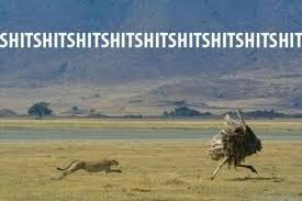 Ostrich Meme - ruuuuunnnn meme by stix4393 memedroid
