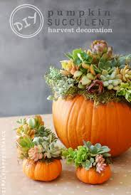 diy pumpkin succulent harvest decoration simply happenstance