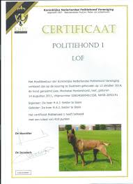 belgian sheepdog for sale in michigan our dogs belgian malinois breeder u0026 trainer ruidoso malinois