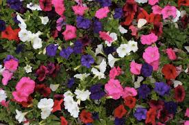 12 Best Plants That Can by Flower Planting Options Terra Turf Landscape
