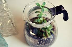 mr kate diy coffee pot succulent terrarium