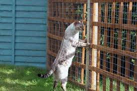 How To Keep Cats Out Of Your Backyard How To Keep Cats Away Top 9 Products And Devices