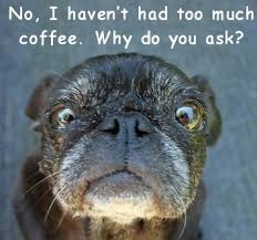 Too Much Coffee Meme - tolsi too much coffee fluffybutts funny dog meme fluffybutts