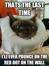 Neck Brace Meme - neckbrace cat memes quickmeme