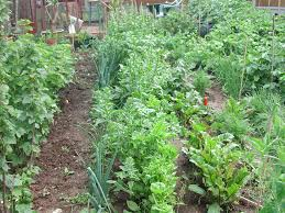 How To Grow Vegetables by Backyard How To Grow A Vegetable Garden How To Grow A Vegetable