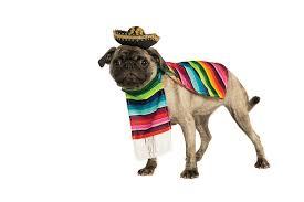 amazon com rubie u0027s pet costume medium mexican serape pet