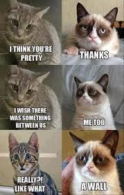Grouchy Cat Meme - cat care grumpy cat cat and grumpy cat humor
