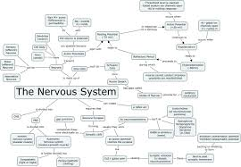 nervous system concept map my blog