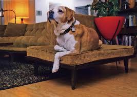 inka mod mcm dog bed or modern dog bed
