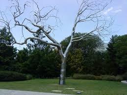 silver tree by nimi97 on deviantart