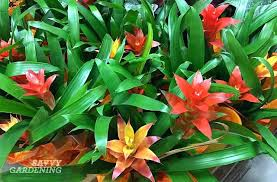 astonishing extraordinary common poisonous house plants new