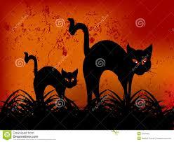 happy halloween funny halloween black cat illustration halloween cat images festival