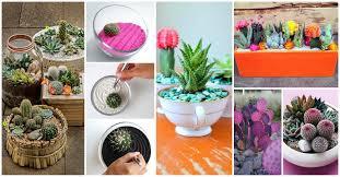 Cactus Garden Ideas 15 Awesome Mini Cactus Gardens