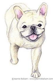 french bulldog sketches u2013 iii still a dreamer