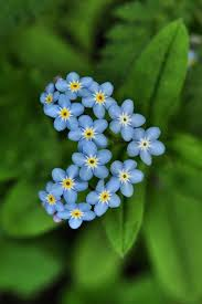 forget me not do not worry if you built your castles in