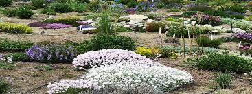 phoenix landscaping maintenance xeriscape design u0026 lawn care