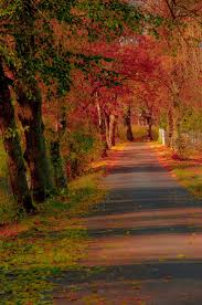 Fall Autumn 12870 best fall autumn my fave season images on pinterest fall