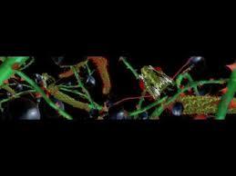 basement jaxx scars ft meleka kelis u0026 chipmunk video by