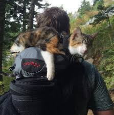 Colorado how to travel with a cat images Meet honey bee our rescued blind cat who loves hiking with us jpg