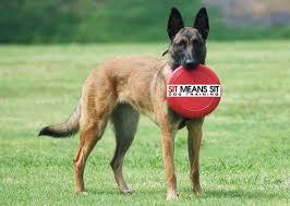 belgian sheepdog jewelry sit means sit u0027 san diego dog training san diego a list
