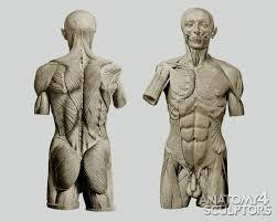 Human Anatomy Reference 90 Best Anatomy 4 Everyone Images On Pinterest Human Anatomy