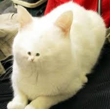 White Cat Meme - 25 random funny pics to inspire your humor bone team jimmy joe