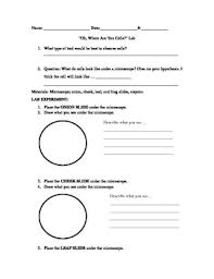 plant and animal cell lab sheet by techknowledgey in teaching tpt