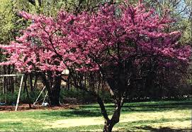 ornamental trees landworks inc residential commercial