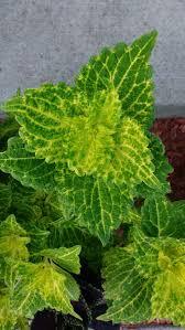 Poolanlagen Im Garten 265 Besten Plantas Con Flor Bilder Auf Pinterest Gärten