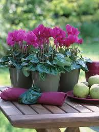 Sangria Colored Wedding Decorations 152 Best Potted Flower Wedding Images On Pinterest Floral