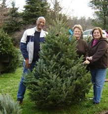 franciscan center trees for sale