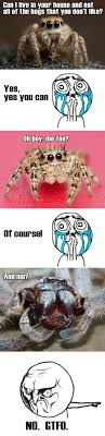 Cute Spider Meme - cute spider meme spiders pinterest spider meme meme and memes