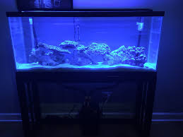55 gallon aquarium light beginner 55 gallon simple reef tank saltwaterfish forum